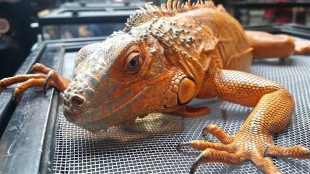 Le salon des animaux exotiques de saguenay d m nage for Salon animaux 2017